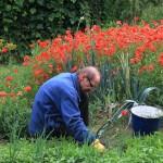 Gardening in the Park