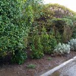 Hedge replacement