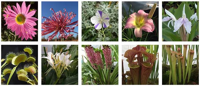 panache plants