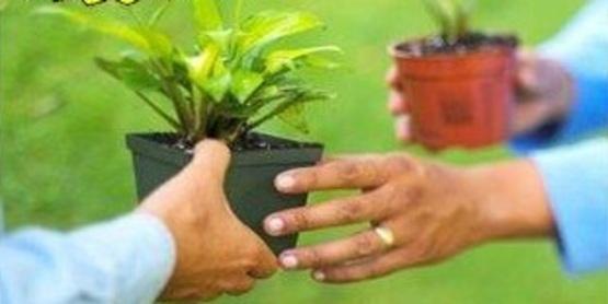 plant swap in cromer