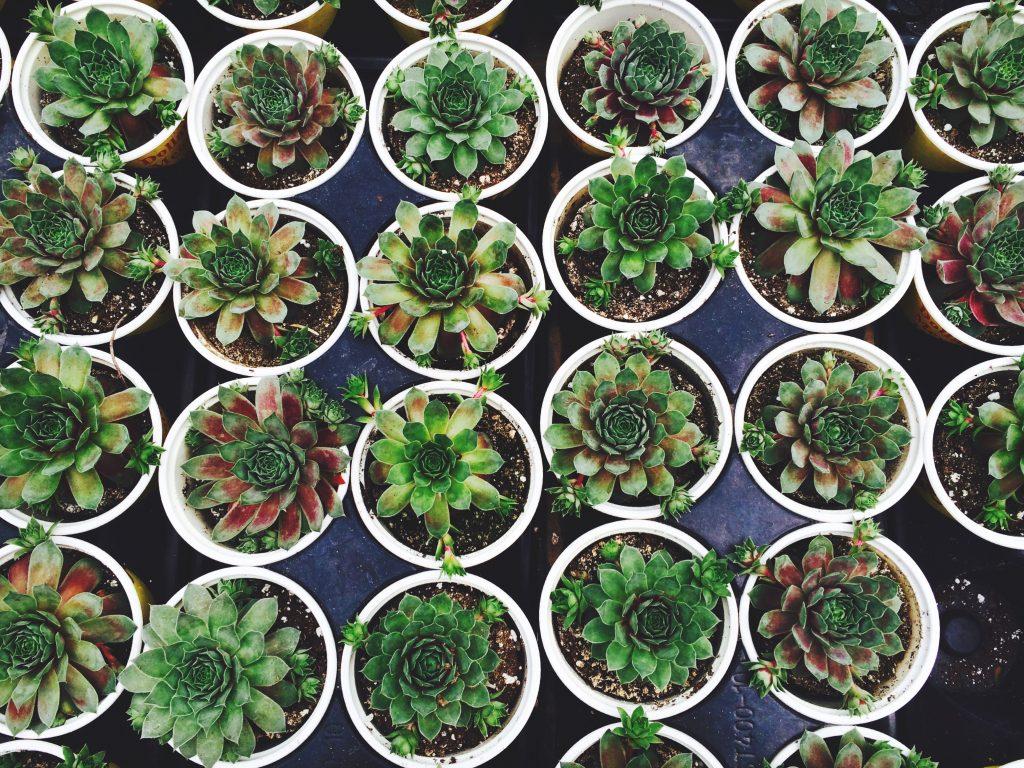 plant tombola